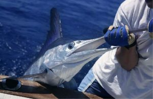 Deep Sea Fishing Tours