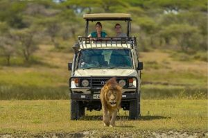 Safari Package Offers