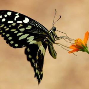 Zanzibar Butterfly Project