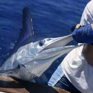 Experience Deep sea fishing