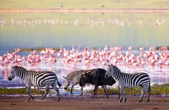 3-Day Safari to Ngorongoro Crater Tarangire and Lake Manyara National Park