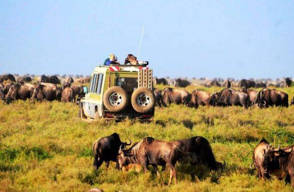 3-Day Safari Tour to 4 National Parks