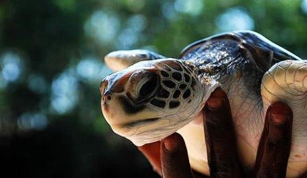 Nungwi Sea Turtle Natural Aquarium VIP