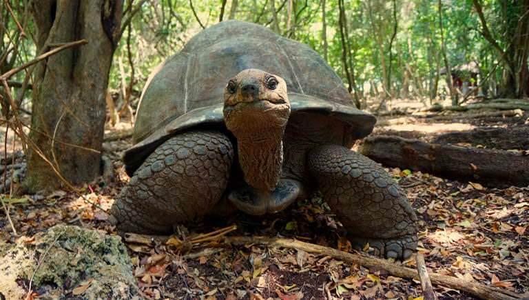 Prison Island Ultimate Giant Tortoise Tour and Snorkeling|Sunbathing Tour