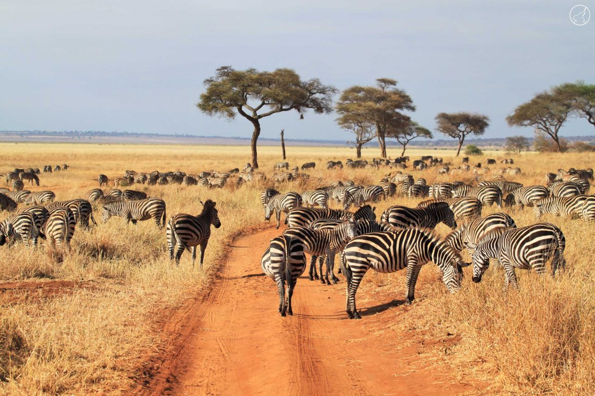 3-Day Classic Tarangire National Park Tour from Arusha