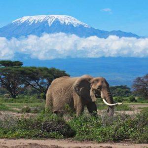 2-Day Northern Circuit Kilimanjaro National Park: Big 5 Game Drive and Kilimanjaro National Park