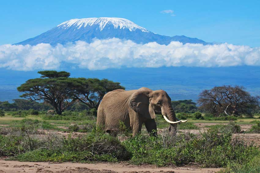 2-Day Northern Circuit Kilimanjaro National Park: Big 5 Game Drive and Kilimanjaro National Park