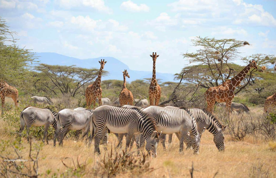 5 Days 4 Nights Budget Camping Safaris