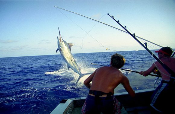 Deep Sea Fishing by Private Boat Charter
