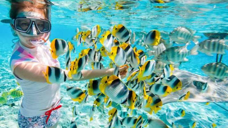 Bawe Island Snorkeling Tour