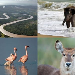 Full Day Saadani Game Reserve Safari
