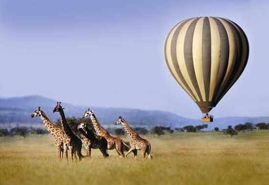 Serengeti Balloon Flight at Sunrise