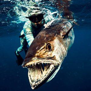 Spearfishing in Zanzibar Archipelago