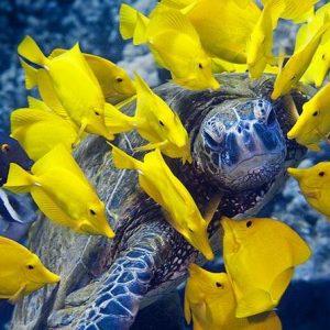 Snorkeling in Tumbatu Island Atoll